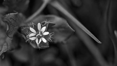 Fleurs Des Champs20 by hubert61