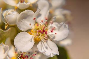 Alencon Fleur 30 mars 2019 (20) by hubert61