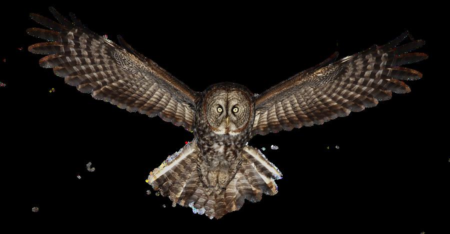 Owl PNG by LG-Design on DeviantArt