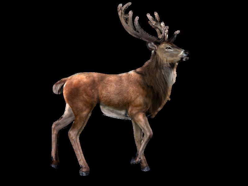 Design Png Transparent Elk Png by lg Design