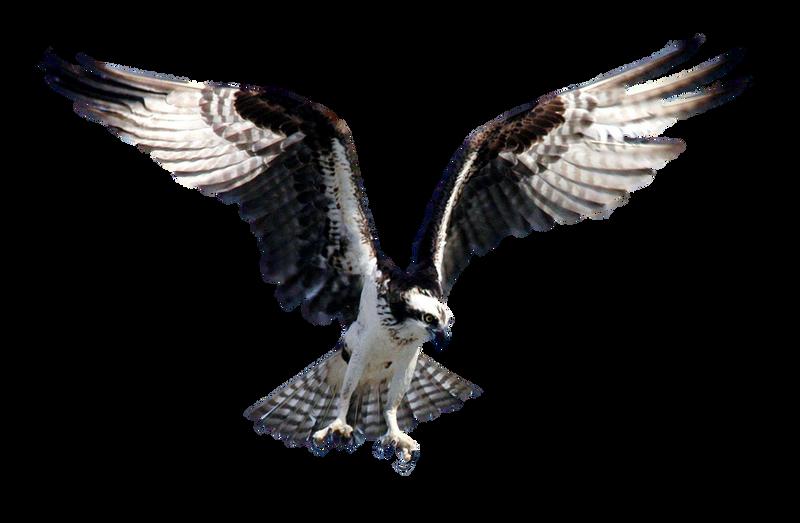 bird wings spread - 1121×680