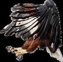 Eagle PNG by LG-Design