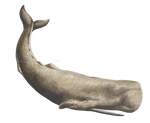 Whale Sperm PNG