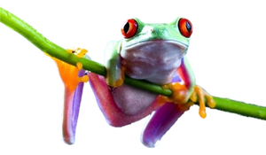 Frog PNG by LG-Design