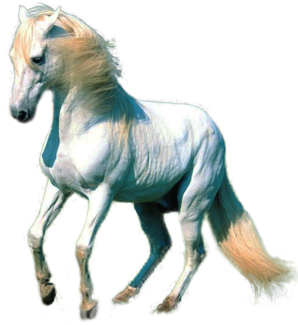 Horse Png White horse png by lg-design Running Horse Png
