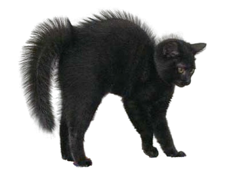 Black Cat Halloween PNG