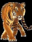 Tiger 2 PNG