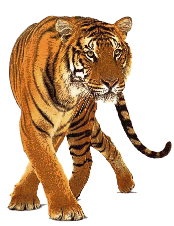Tiger 2 PNG by LG-Design