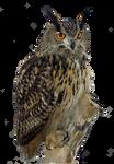 Eagle Owl PNG