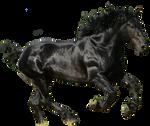Black Horse PNG