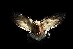 Eagle 2 PNG