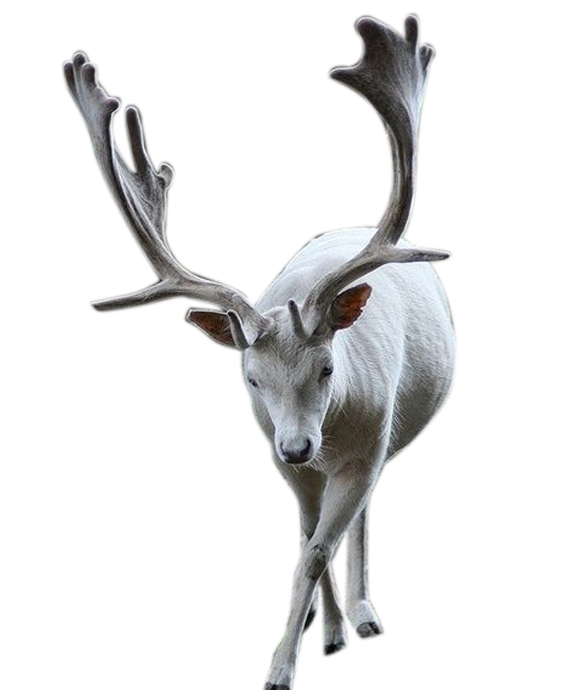 Christmas Elk  PNG by LG-Design