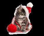 Christmas Kitten PNG