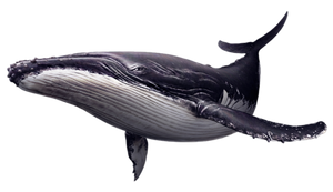 Balena PNG