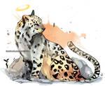 Last mountain leopard in Egypt