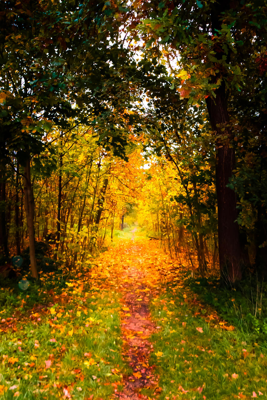 Autumn Corridor by Awstein