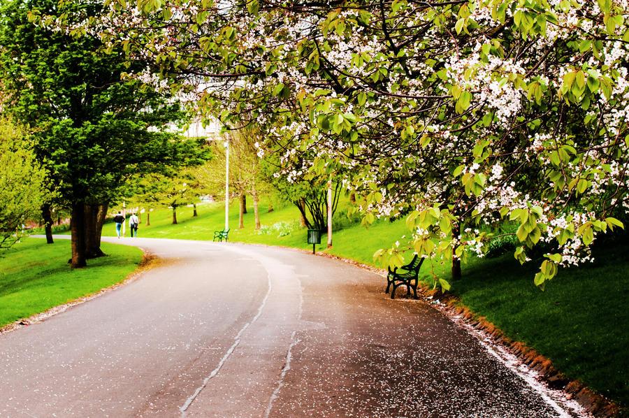 Spring by Awstein