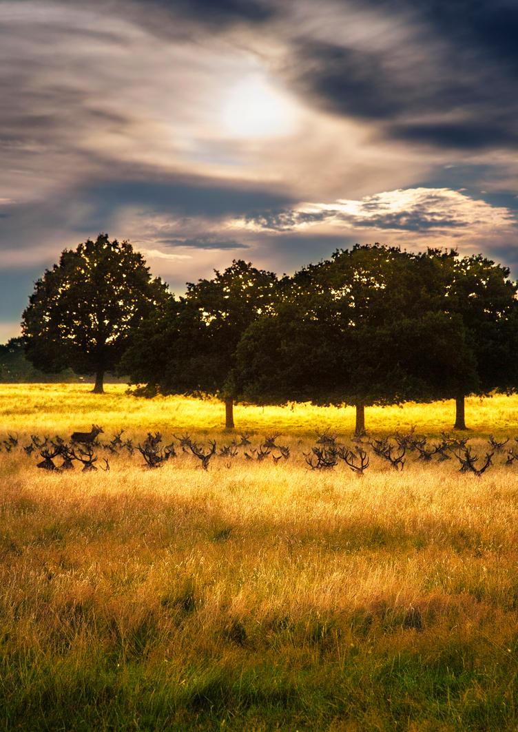 Sunset deer by Awstein