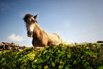 Horse Fashion by Awstein