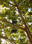 PARIS: Shoes in a Tree