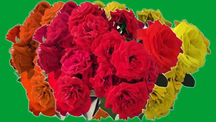 Flower Power: Rose Bouquet