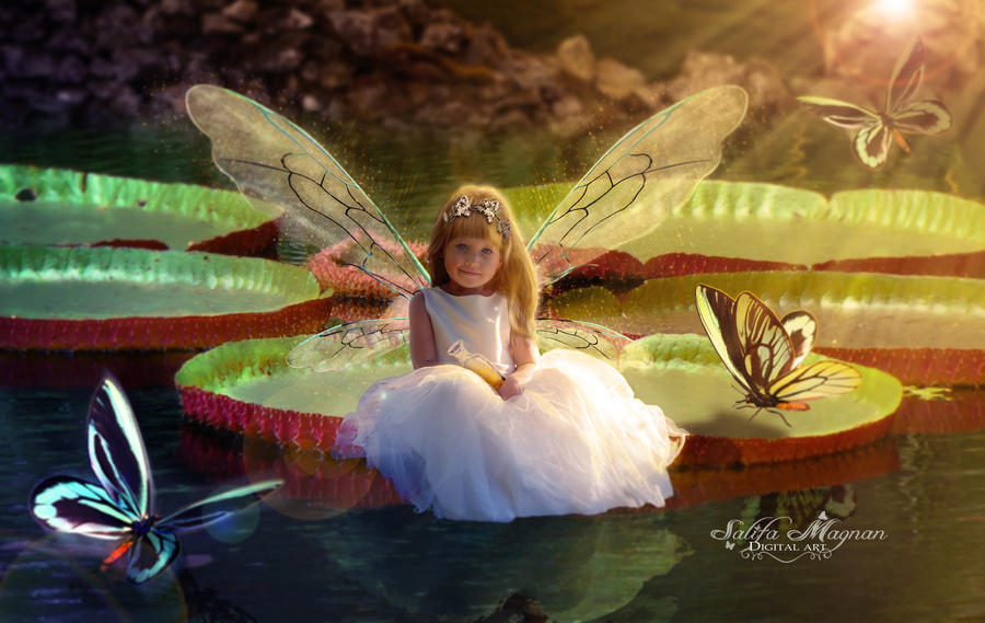 Water lily Fairy