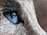 Cats eye by IRSart