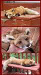 Cutey Red Fox Plush