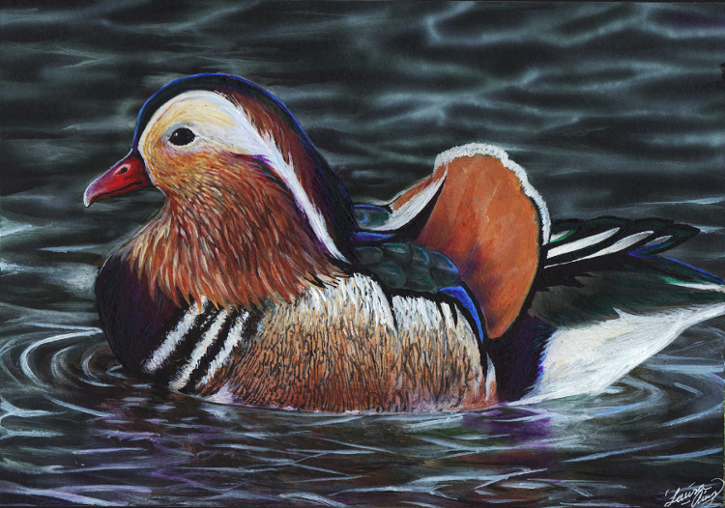 Mandarin Duck by MorRokko