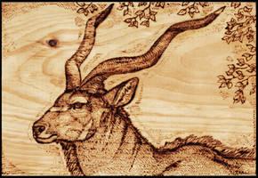 Bull Kudu Wood Burning by Gray-Ghost-Creations