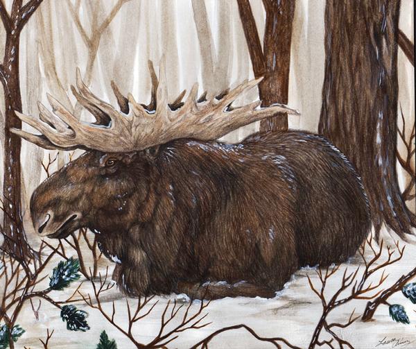 Winter Moose by MorRokko