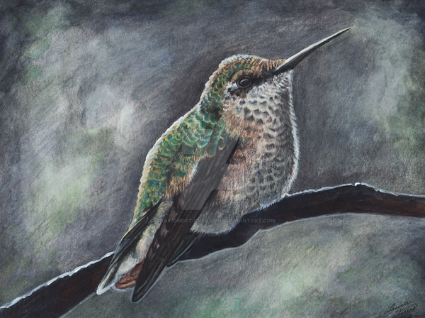 Peaceful Hummingbird by MorRokko
