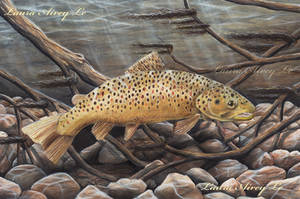 Brown Trout by Gray-Ghost-Creations