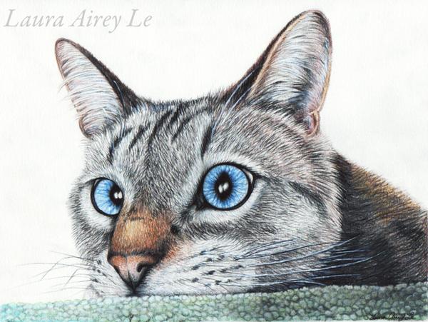 Intense Kitty by MorRokko