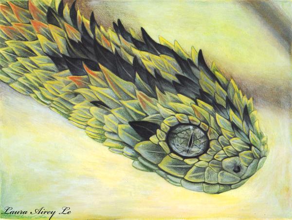 Rough Scaled Bush Viper by MorRokko