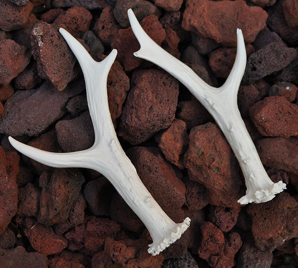 Hand Made Roe Deer Antler Replica Pair by MorRokko