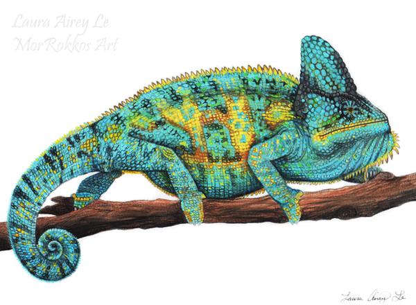 Stanley the Veiled Chameleon by MorRokko