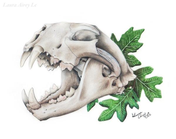 Mt. Lion Skull by MorRokko