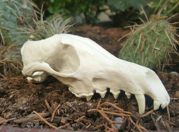 Hand Made Red Fox Skull Replica Flower Pot by MorRokko
