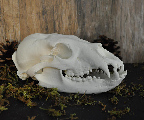 Handmade Black Bear Skull by MorRokko