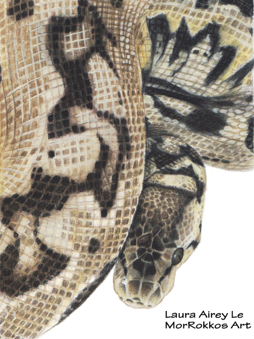 Ball Python Drawing by MorRokko