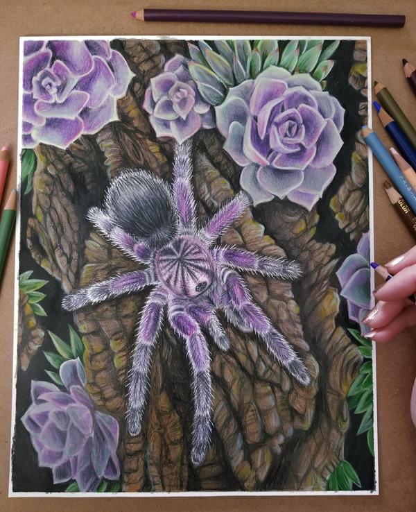 Purple Bloom Tarantula
