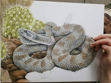 Prairie Rattlesnake Work In Progress