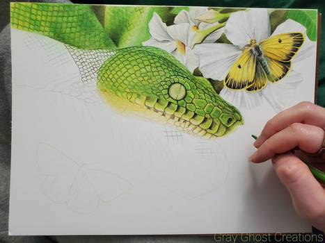 Emerald Tree Boa - Work In Progress