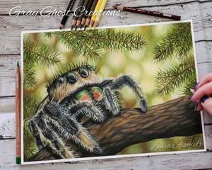 Holiday Jumping Spider