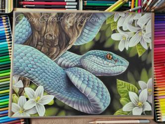 Blue Insularis Viper