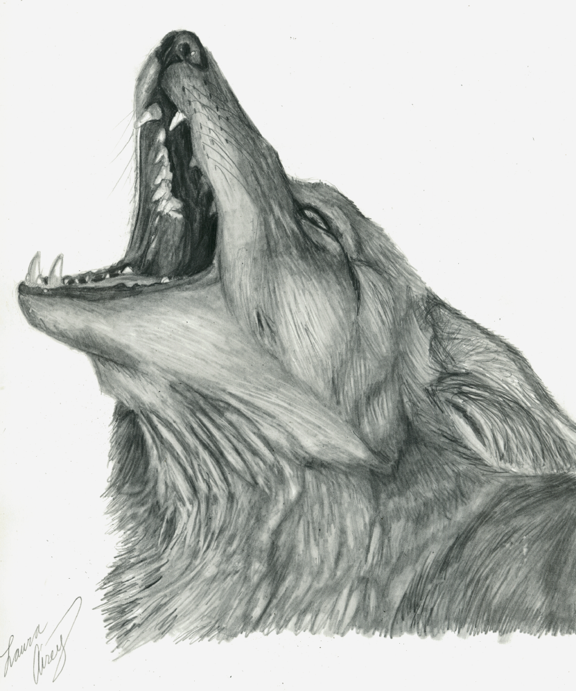 Beautiful Howling Coyote Coloring Page Images - Entry Level Resume ...