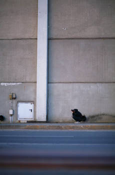 lonesome photo