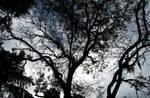 Florida Winter Trees