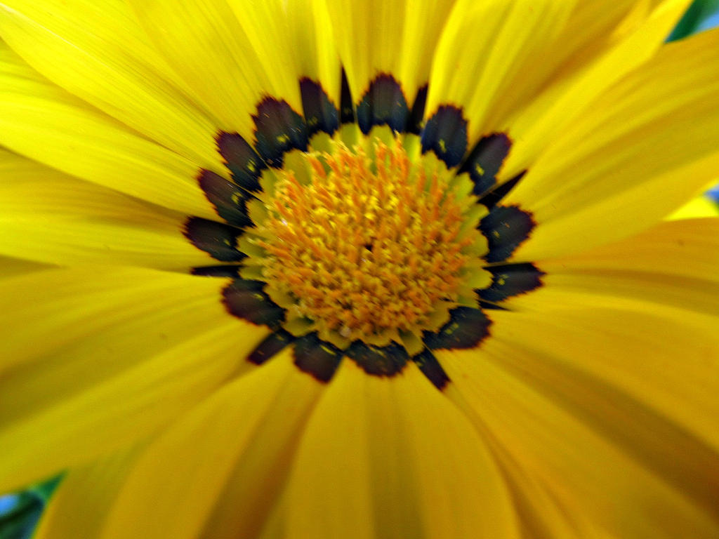 Yellow Flower Close Up By Wisteriasweb On Deviantart